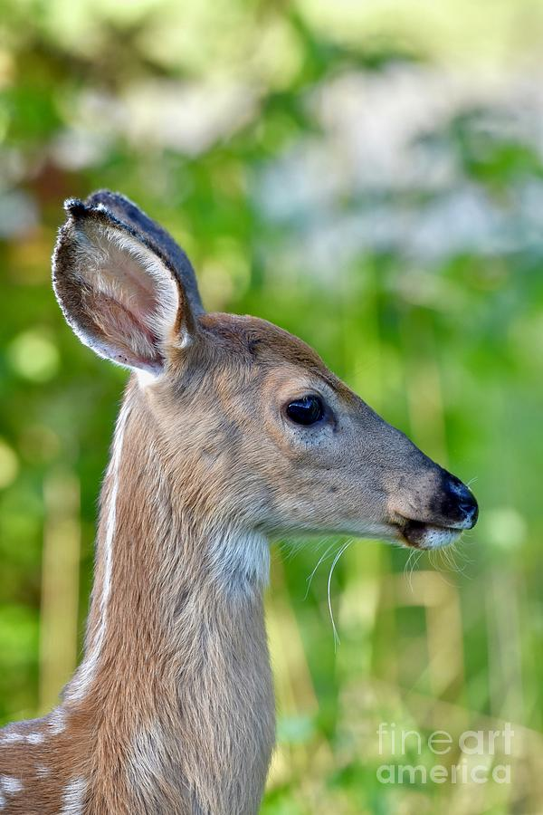 Deer Side View : Photograph, Images