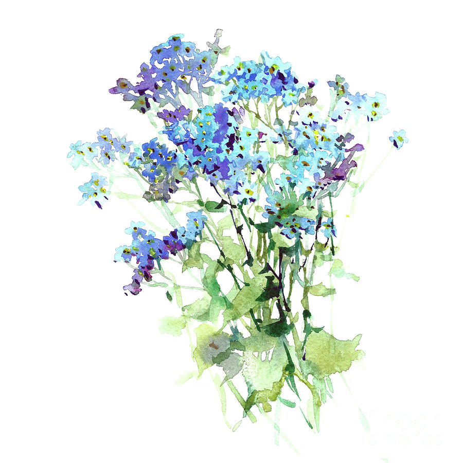 forget me not watercolor