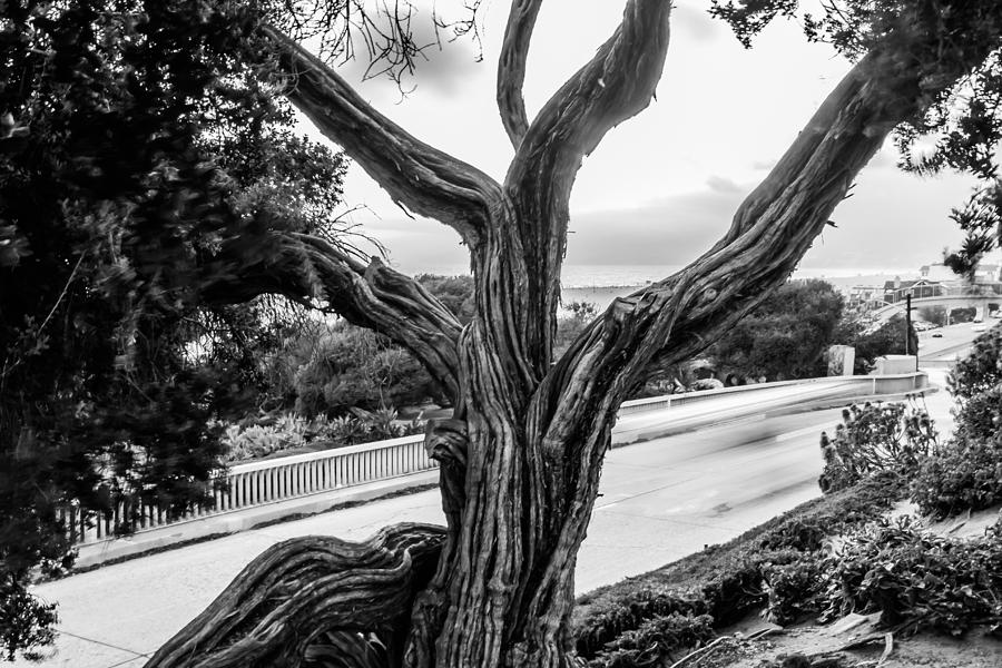 Gnarled Tree Photograph by Marco Duran