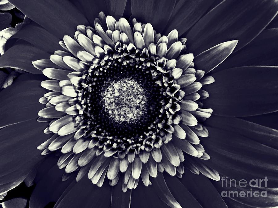 gothic flower by rachel