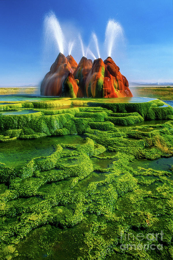 green fly geyser by