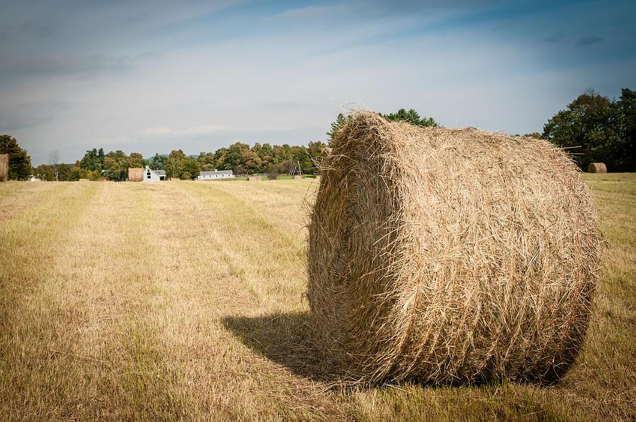 hay bail in field