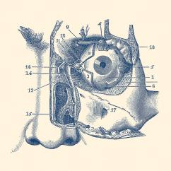 Vintage Diagram Wiring For Extension Telephone Socket Human Eye And Tear Duct Anatomy Drawing By Prints