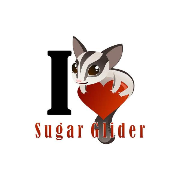 Love Sugar Glider Digital Art Sadhu Rismayana