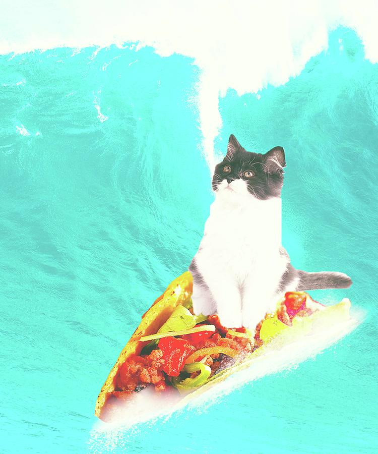 kitty cat surfing taco