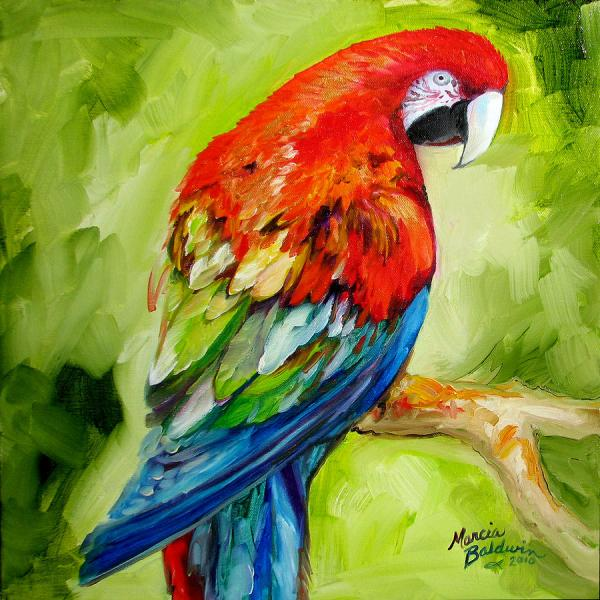 Macaw Tropical Painting Marcia Baldwin