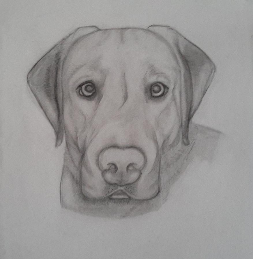 Man's Best Friend Drawing By Holly Bell