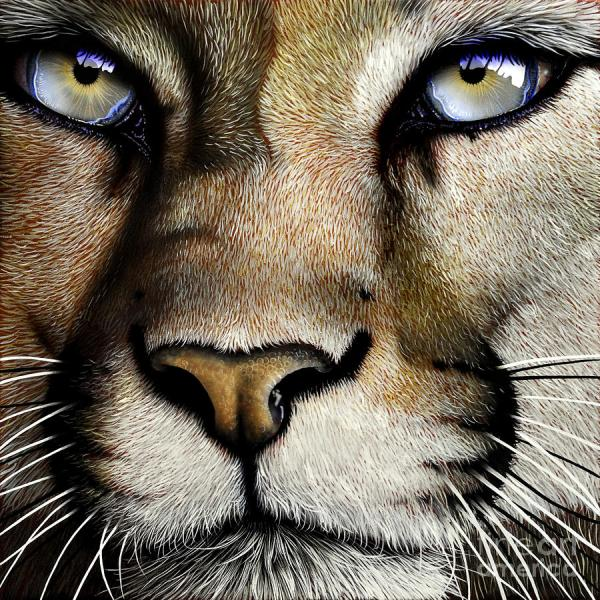 Mountain Lion Cougar Paintings