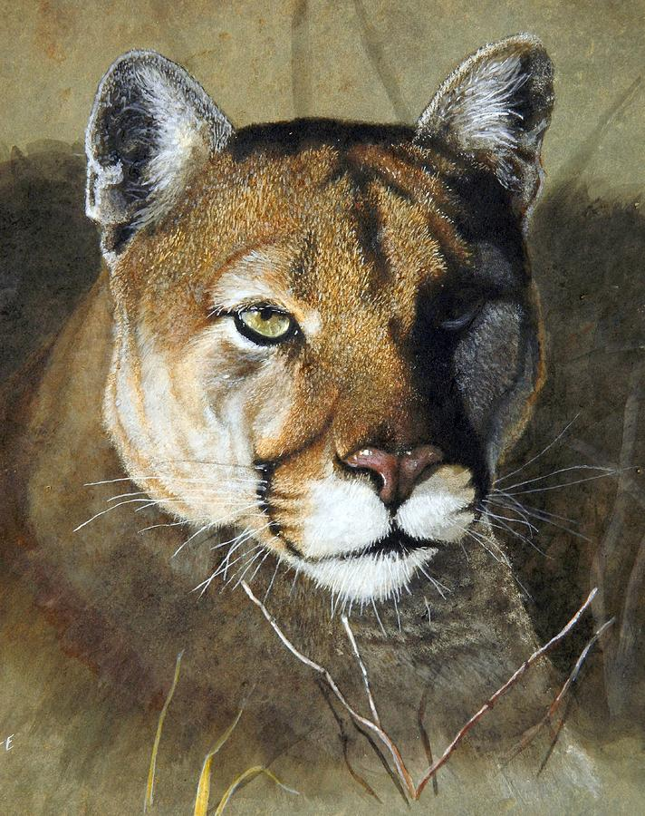 Mountain Lion Portrait Painting by Stan White