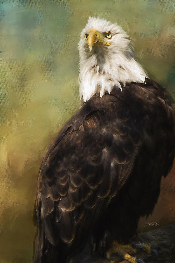 Never Settle  Eagle Art Painting by Jordan Blackstone