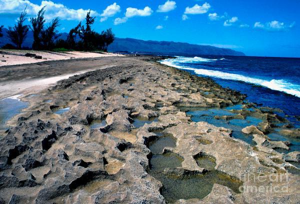 North Shore Oahu Photograph by Thomas R Fletcher