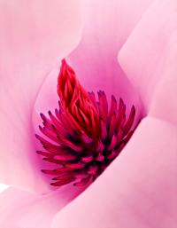 Abstract Pink Red White Flowers Macro Photography Art Work ...