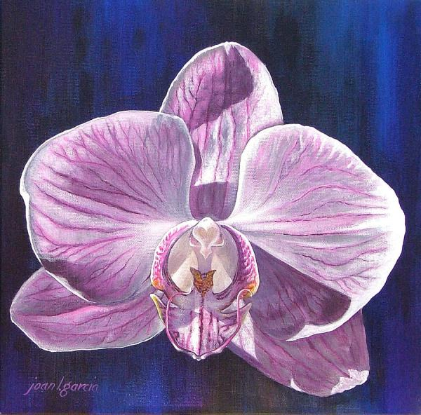 Orchid Painting Joan Garcia