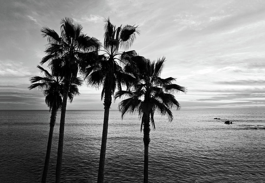 Palm Trees And Ocean Black And White Photography