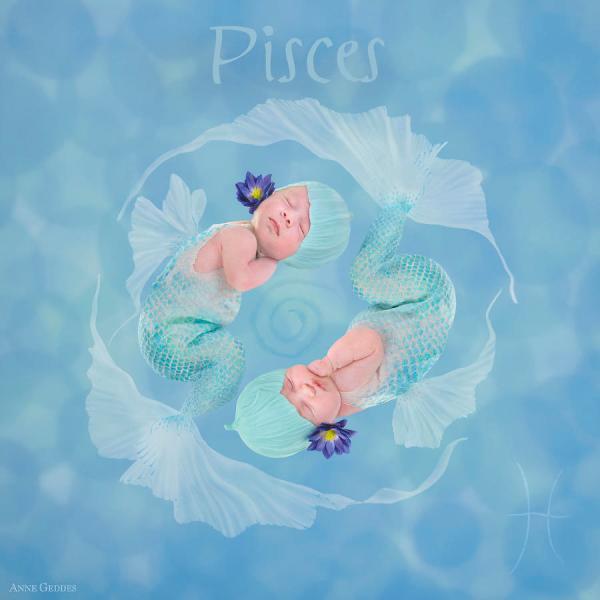 Anne Geddes Babies Zodiac