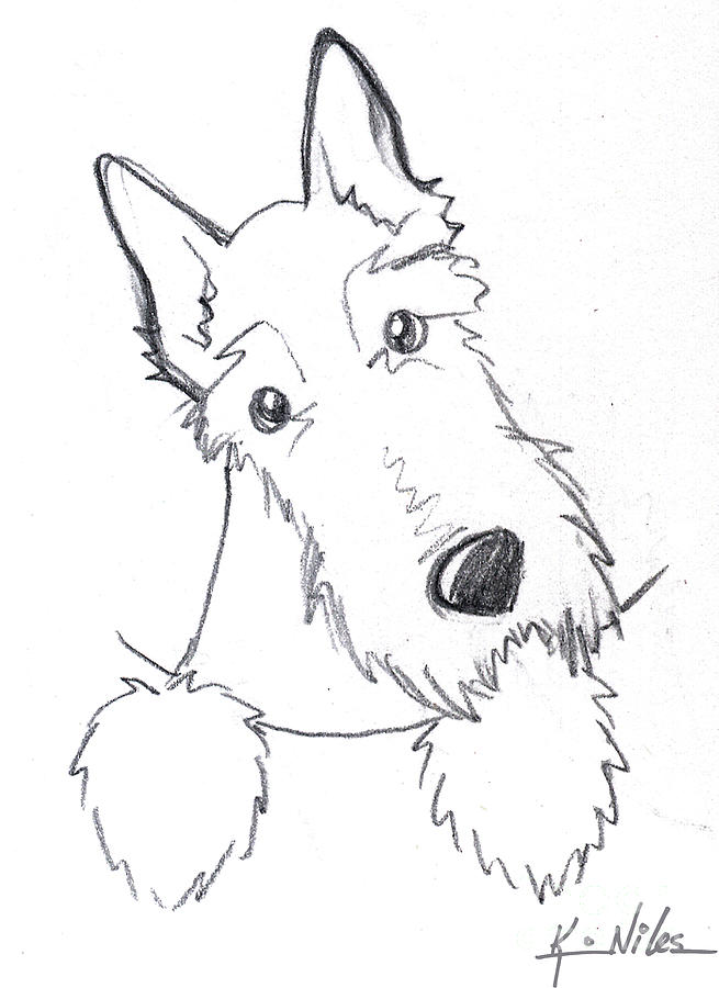 Pocket Scottie Sketch Drawing by Kim Niles