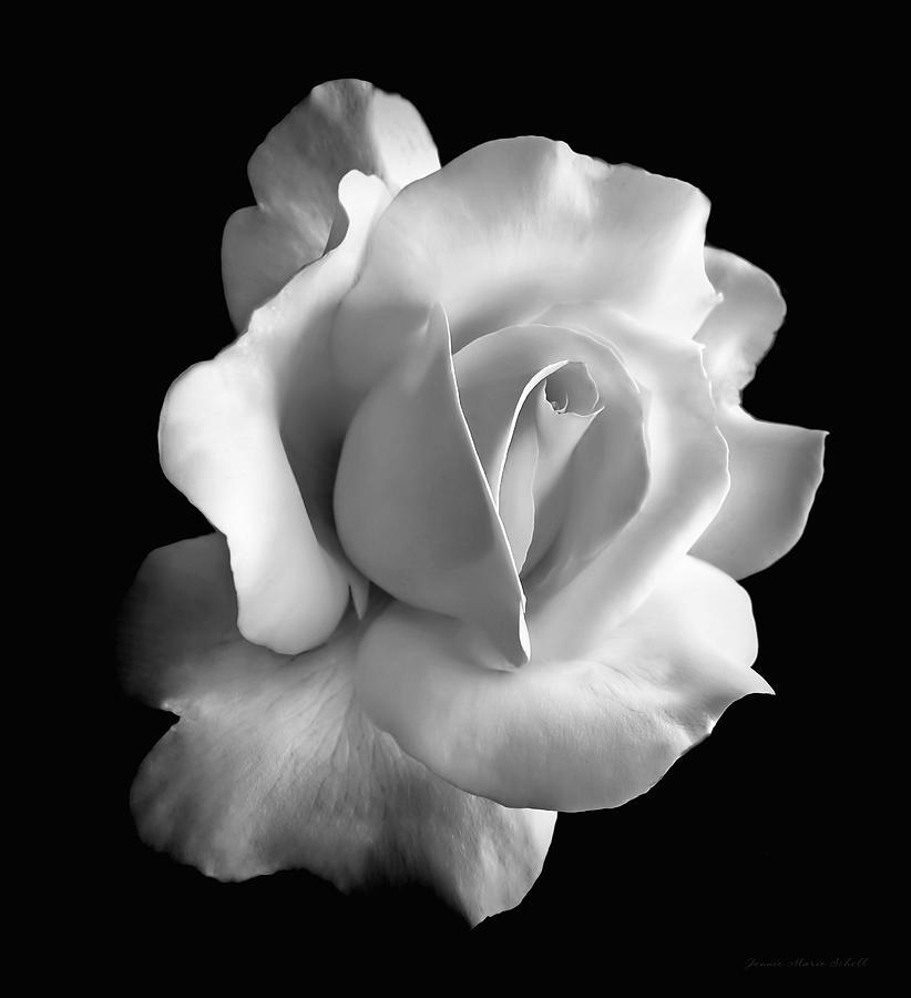porcelain rose flower black
