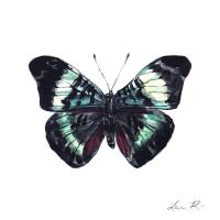 Prola Beauty Butterfly Art Butterfly Decor Wall Art ...