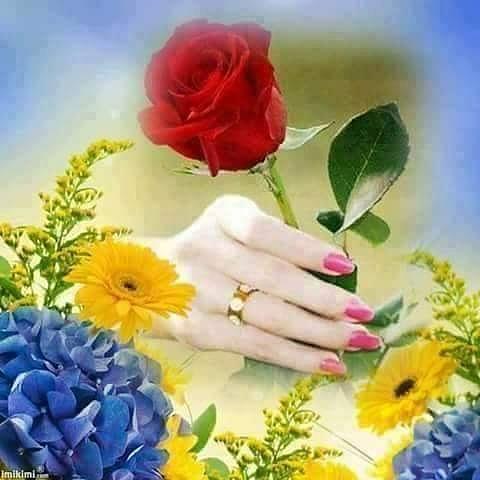 romantic rose flower