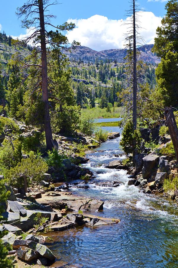 Scenic Creek Near Lake Tahoe Photograph by Cherie Cokeley