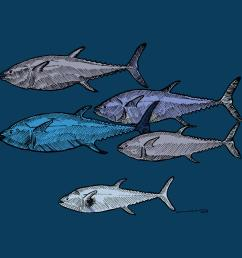 drawing drawing school of tuna fish full color by karl addison [ 900 x 900 Pixel ]