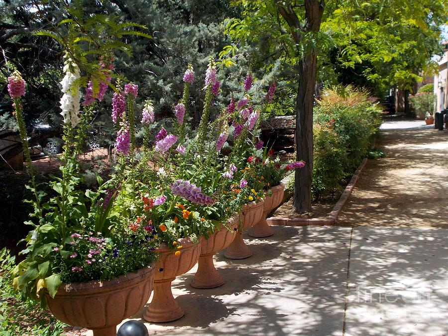 Image result for images of flowers at Tlaquepaque