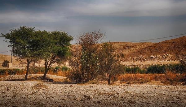 trees in desert landscape