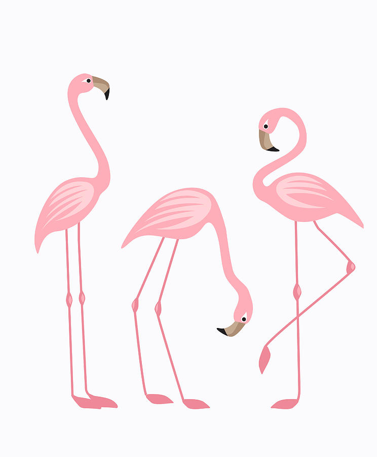 tropical bird flamingos by