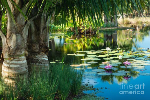 tropical garden pond