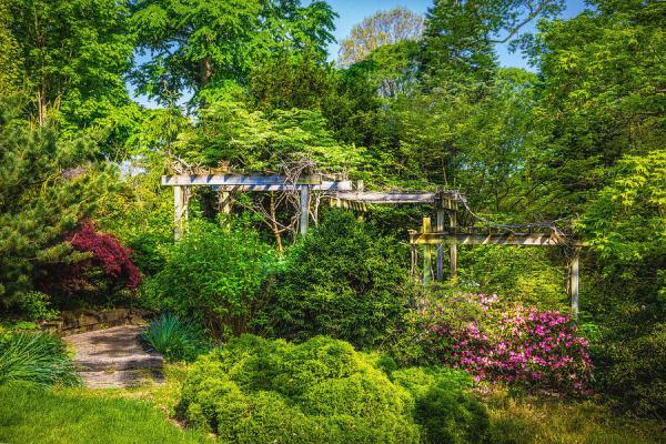 vibrant landscape greenery