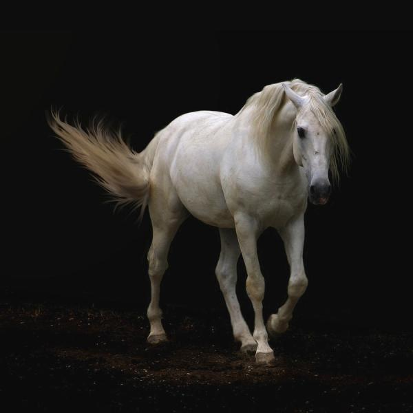 White Horse Photography Art