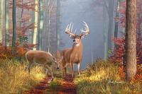 Deer Wall Art - Whitetail Deer Wall Art - Dale Kunkel Deer Art
