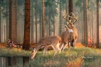 Whitetail Deer Artwork - Quality Time Painting by Deer Art ...