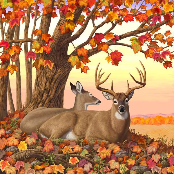 Crista Forest Deer Paintings