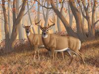 Whitetail Deer Painting - Fall Flame Painting by Crista Forest