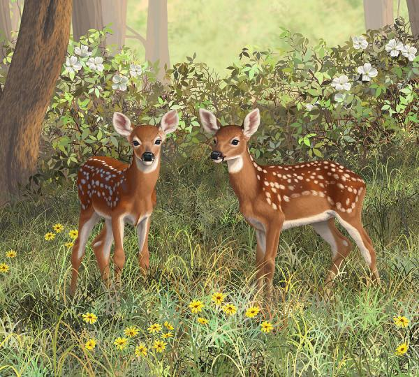 Painting and Whitetail Deer Fawns