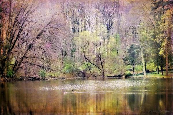 wisteria pond surreal dreamy landscape