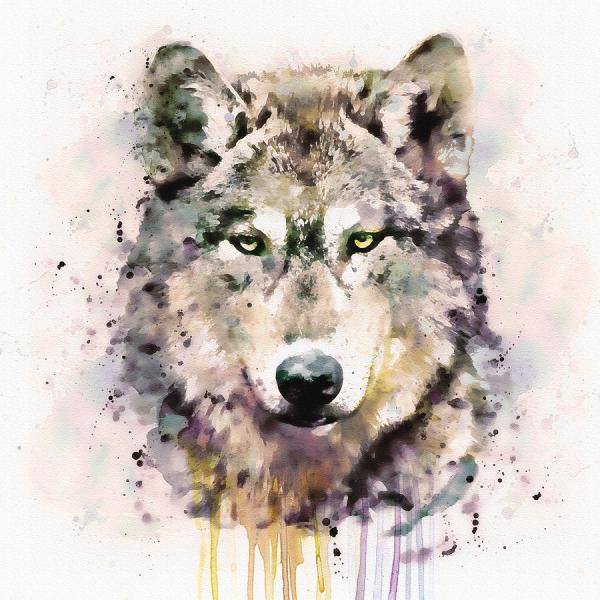 Watercolor Wolf Head