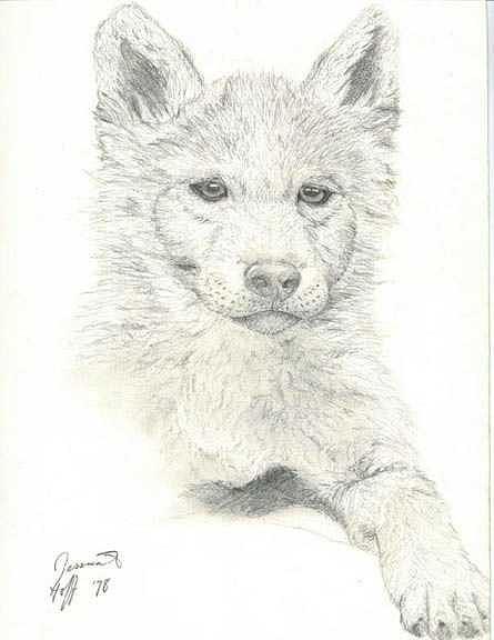 Wolf Pup Drawing : drawing, Drawing, Jesska