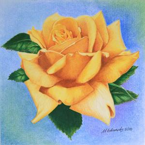 rose yellow drawing marna drawings flavell edwards roses birthday happy 1st august which uploaded