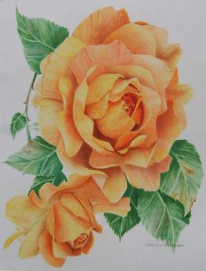yellow rose drawing sharon drawings 3rd uploaded which