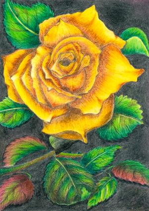 yellow rose drawing tara krishna flower drawings 22nd uploaded august which