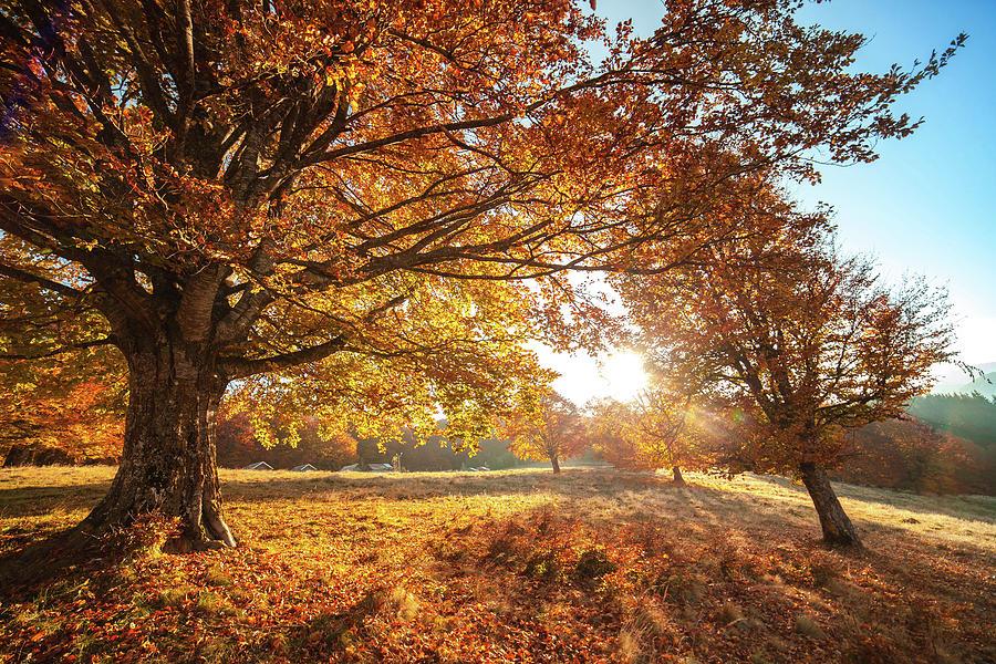 autumn scenery with dry
