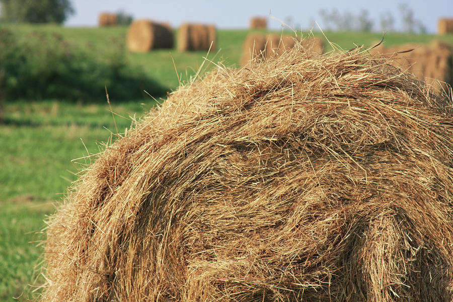 hay bail closeup by