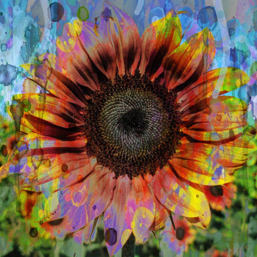 hip hop sunflower 48x48