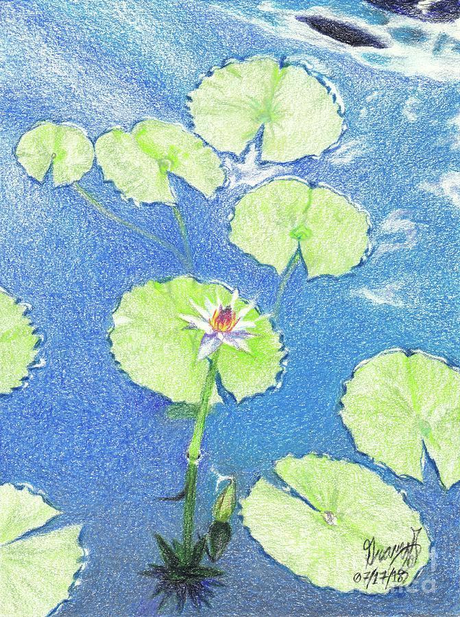 Realistic Lotus Drawing : realistic, lotus, drawing, Lotus, Water, Lillies, Drawing, Graves, Broderick
