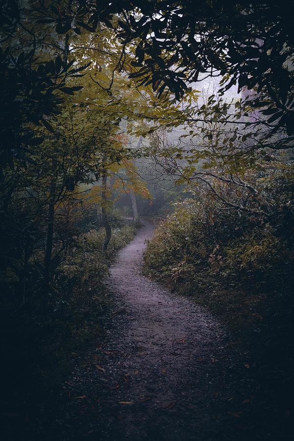 The mount pisgah arboretum offers a denser network of trails on the coast fork willamette river. Mt Pisgah Trail Photograph By Simon Nauert