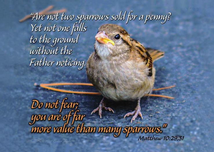 Sparrow Scripture Matthew 10 Mixed Media by Brian Tada
