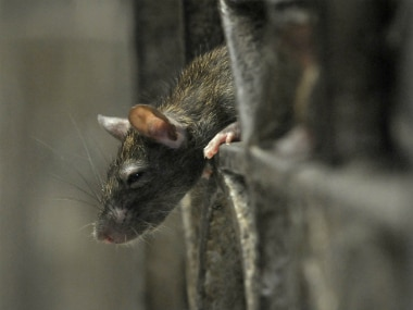 Man dies from hantavirus in China: All you need to know about the ...