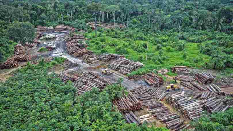Bolsonaros policies lead to 12 year high of deforestation rates in the Amazon rainforest